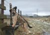 retkeily_koiran_kanssa_tintohill_2