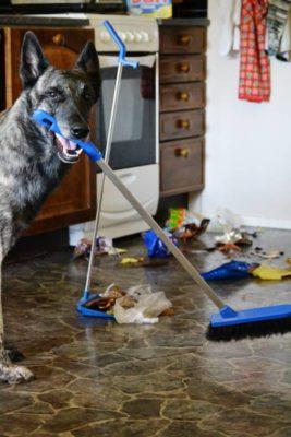 roskakäytös_koiran_koulutus