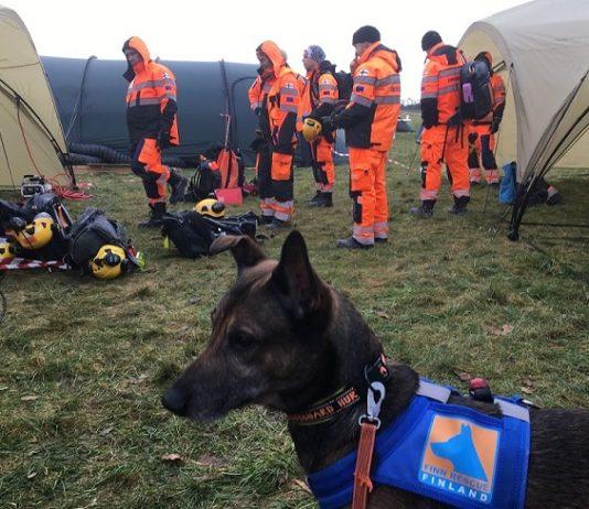 finn_rescue_team_pelastuskoira_1