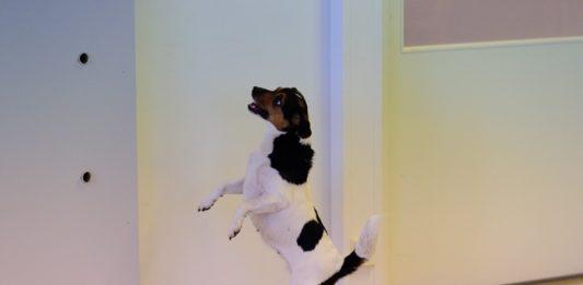koiran_hajutyöskentely_hajukuva