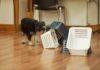 koiran_hajutyöskentely_kohdehaju