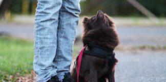 koiran_kanssa_treenaaminen_sivu