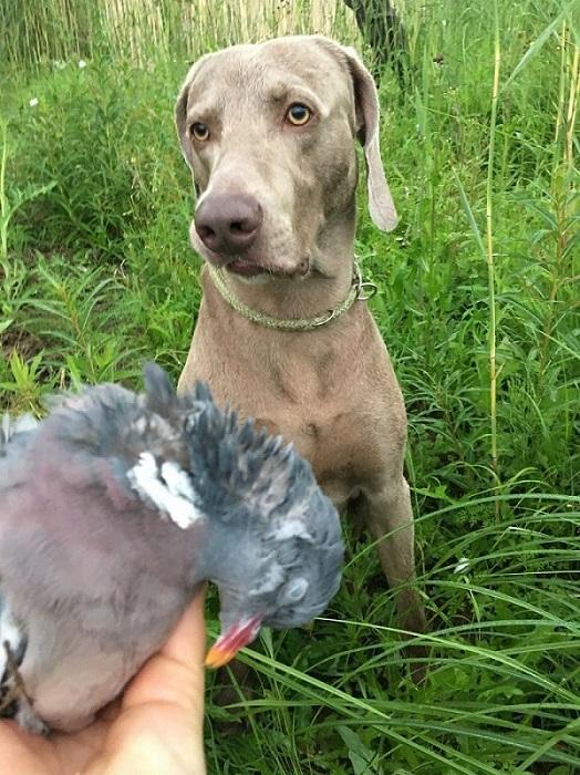 metsästyskoira_lintujahti