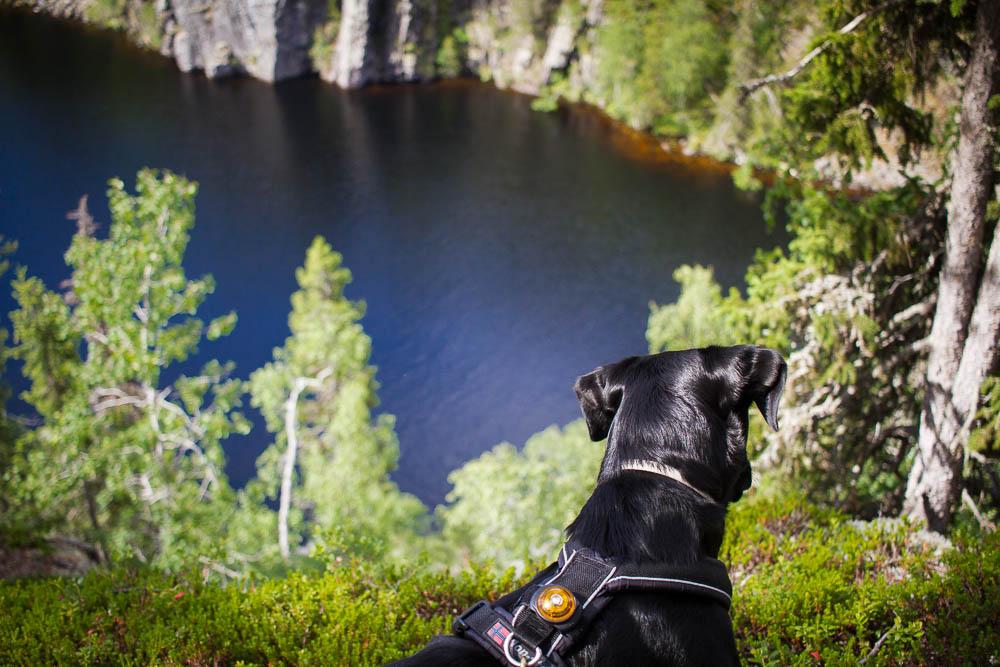 retkeily_koiran_kanssa_hossa_julma_ölkky_1