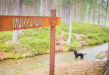 retkeily_koiran_kanssa_hossa_muikkupuro_1