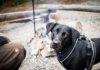 retkeily_koiran_kanssa_hossa_värikallio
