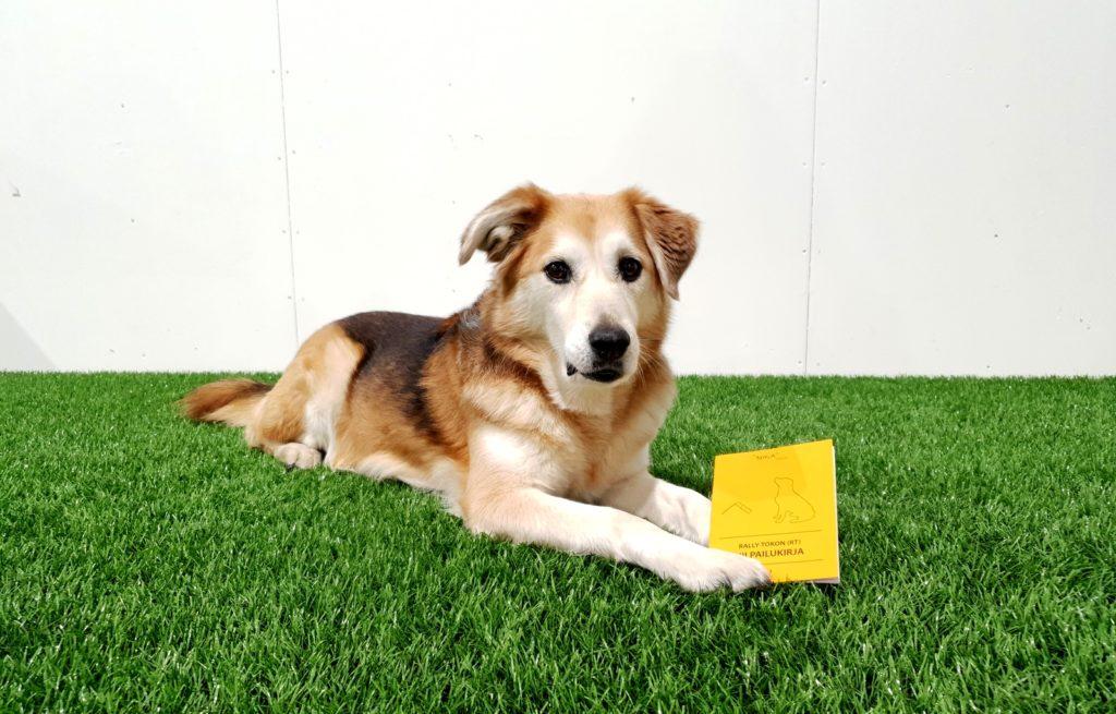 Kisakirja on keltainen kilpailulupakirja, johon merkitään koiran tiedot.