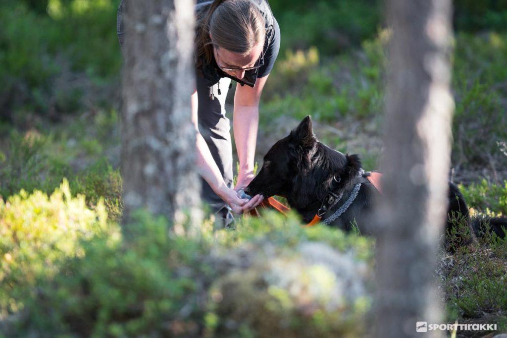 Hallinnan koulutus -harjoitusten tavoitteena on itsevarma, yhteistyöhaluinen koira.